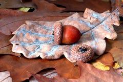 жолудь выходит дуб стоковые изображения rf