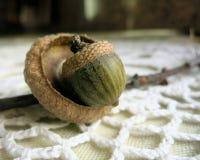 Жолудь в пустом cupule на doily шнурка стоковое фото