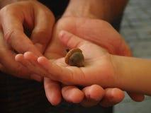 Жолудь в руках ребенка Стоковое Изображение