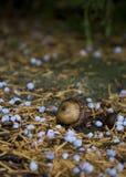 Жолудь на земле леса Стоковые Фотографии RF