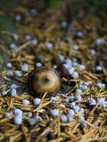 Жолудь на земле леса Стоковое Фото