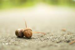2 жолудя на дороге Стоковое Фото