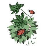 Жуки вектора вползая на листьях Стоковое Изображение