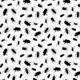 жуки малые Стоковые Фотографии RF