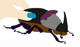 жук большой бесплатная иллюстрация