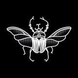 Жук вектора Красиво ornated насекомое Стоковые Фото