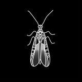 Жук вектора Красиво ornated насекомое Стоковое Фото