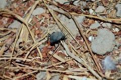 Жук в сухой листве Стоковое Фото