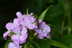 Жук в цветах Стоковые Изображения