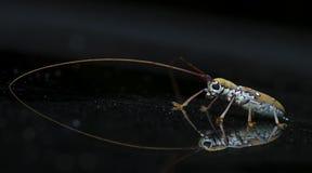 Жук, жук красивый, жук Таиланда Стоковые Фото