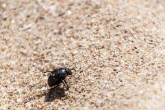 Жук идя на песок стоковое изображение rf