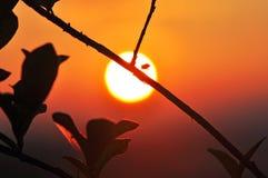 Жук на ветви дерева на восходе солнца Стоковое Изображение RF