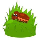 Жук носорога шаржа Стоковое Изображение