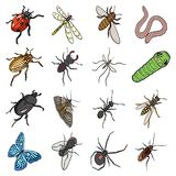 Жук, оса, пчела, муравей, муха, паук, москит и другой вид насекомого Различные насекомые установили значки собрания в шарже бесплатная иллюстрация