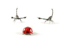 жук уединённый Стоковое Изображение