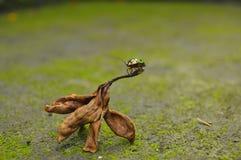 жук цветастый Стоковая Фотография
