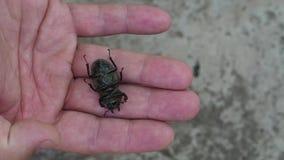 Жук черноты макроса насекомого акции видеоматериалы