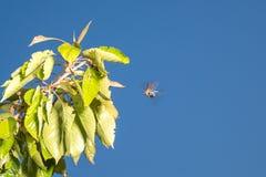Жук-чефер на лист против неба стоковая фотография
