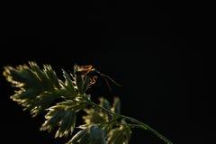 жук Стоковые Изображения RF