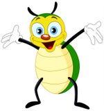 жук Стоковая Фотография RF
