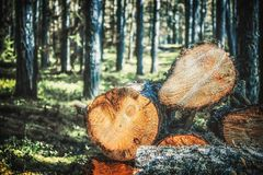 журналы деревьев в лесе после валить Ые стволы дерева logging Селективный фокус на фото стоковые изображения rf