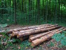 журналы длиной На предпосылке леса лета Стоковая Фотография RF
