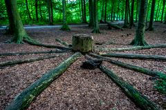 Журналы древесины вокруг пня дерева на быке Haagse, лесе в Ha Стоковые Изображения