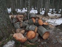 Журналы на лесе Стоковая Фотография