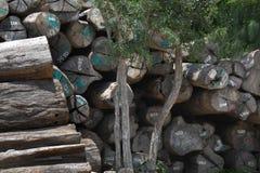 Журналы обезлесения, Teak деревянные от леса и Юго-Восточная Азия Стоковые Фотографии RF