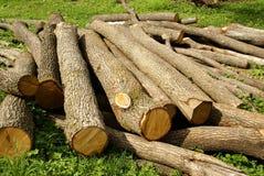 Журналы древесины внося в журнал Стоковое Изображение
