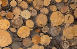 Журнал отрезал вниз с предпосылки конца-вверх деревьев номера abunch естественной Стоковая Фотография