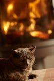 журнал пожара кота близкий cosy ослабляя вверх Стоковое фото RF