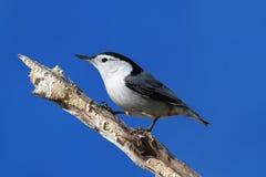 журнал птицы Стоковое Фото