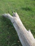 журнал травы Стоковое Изображение