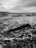 Журнал на пляже в черно-белом стоковое изображение rf