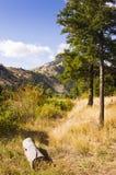 Журнал следом в лесе Стоковое Фото