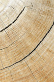 Журнал твёрдой древесины Стоковые Фото