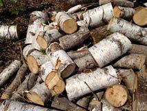 Журналы дерева березы Стоковые Изображения