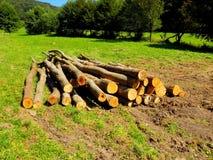 Журналы дерева после деревянного эксплуатирования на луге Стоковые Фотографии RF