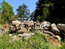 Журналы дерева после деревянного эксплуатирования на луге Стоковое Изображение RF
