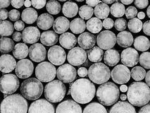 Журналы деревьев в мельнице на черно-белом изображении стоковое изображение rf