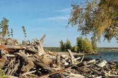 Журналы и driftwood на пляже Стоковые Изображения