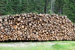 Журналы отрезали лесопогрузчиками в горах для индустрии мебели Стоковая Фотография