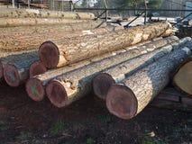 Журналы древесины кучи стоковое фото