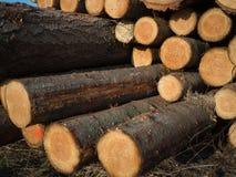 Журналы древесины кучи стоковые фотографии rf