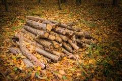 журналы складывают готовую древесину зимы Стоковое Изображение