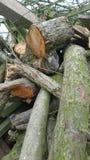 журналы складывают деревянное Стоковое Изображение RF