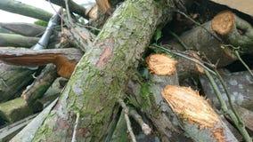 журналы складывают деревянное Стоковые Фото