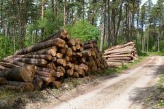 Журналы сосны положены в стога на дороге леса logging стоковое изображение rf