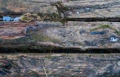 Журналы с льдом и зеленой травой стоковое изображение